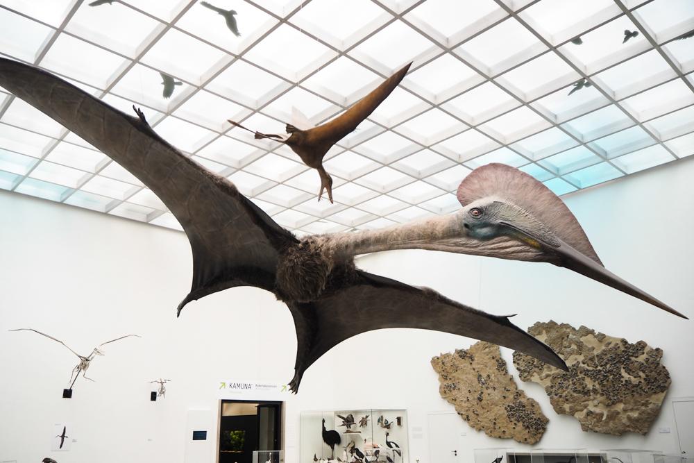 Naturkunde Museum Karlsruhe 16